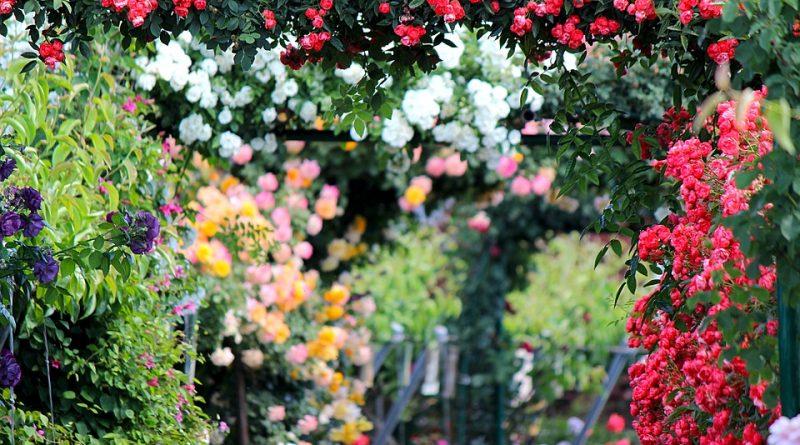 Biesdorfer Blütenfest